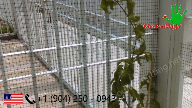 Climbing plant raising using Poultry netting