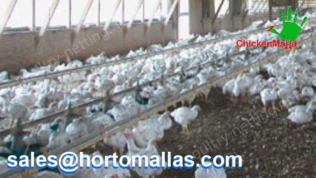 Hen house building with CHICKENMALLA Poultry netting