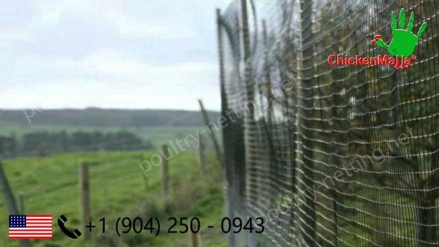 Poultry netting as fence on forest applications