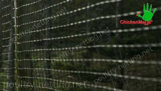 CHICKENMALLA Poultry netting for forest application