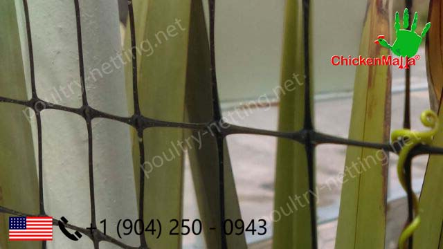 Poultry netting product close up in fence with trellis plants for decorative