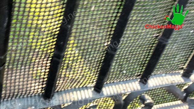 Poultry netting on metal fence for protection